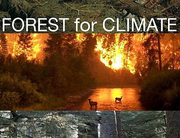 2016-02-01-09_59_30-FOREST-for-CLIMATE.jpg